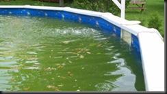 Green-Above-Ground-Swimming-Pool