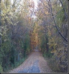 Yankee Woods5_10-16-12