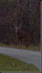 Deer in Midlothian Res