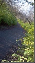 Kankakee River State Pk6_11-11-12
