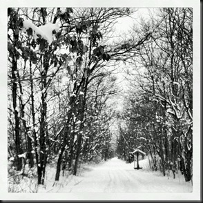Snow OPT_black white_3-6-13