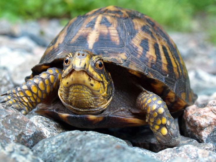 Http Tootallfritz Com 2013 04 04 Calling All Turtles