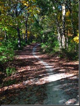 Bullfrog Lake-Pulaski Woods_trail