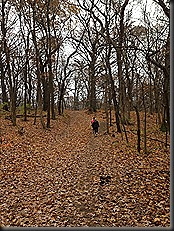 Swallow Cliff_Nov 2013_big hill