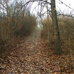 Beechwood loop_off trail 8