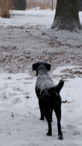 Meadow_Loves Winter