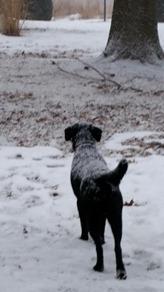 Meadow_Loves Winter